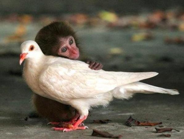 Monkey loves bird